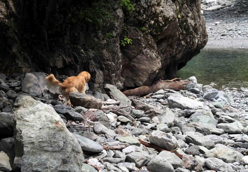 三峰川ですよ 0729 捜索(6)
