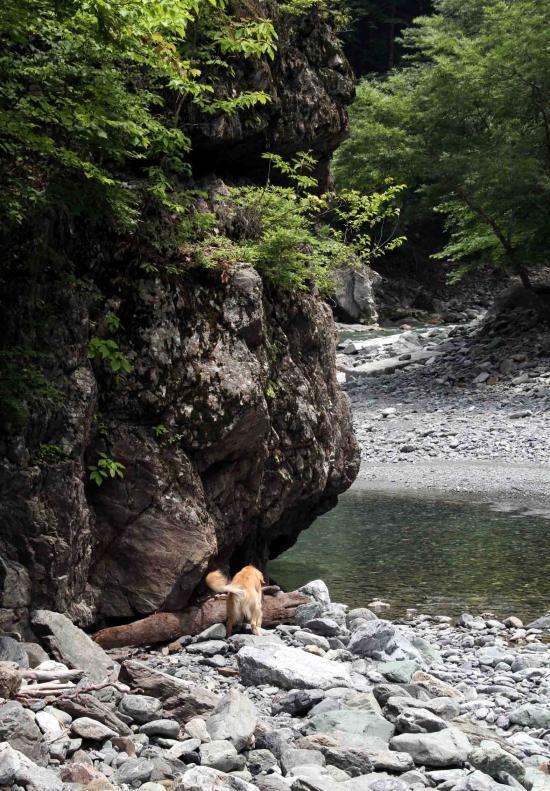 三峰川ですよ 0729 捜索(7)