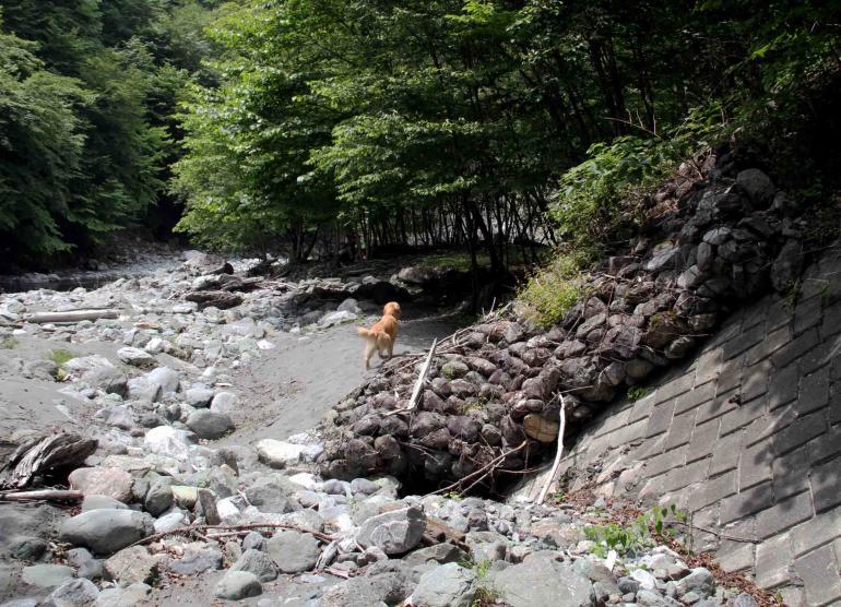 三峰川ですよ 0729 捜索(10)