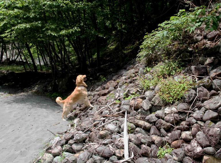 三峰川ですよ 0729 捜索(11)