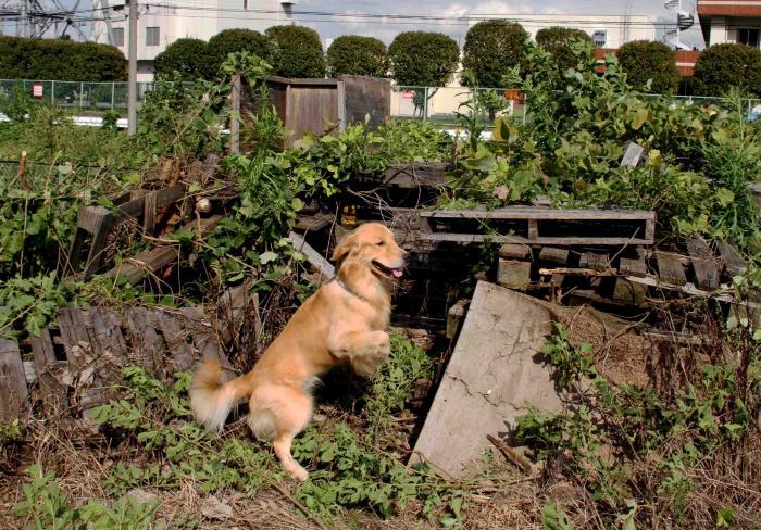 台風17号の近づく日に(1)