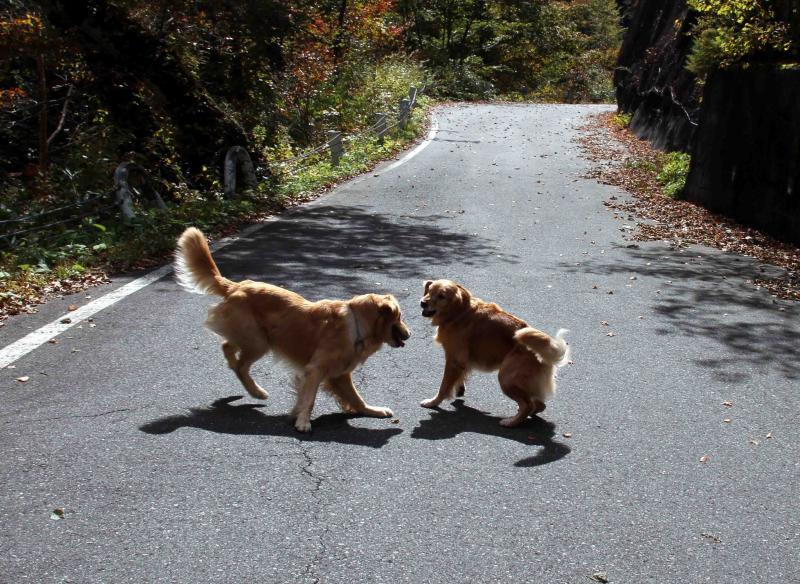 光と影の中の犬たち(1)