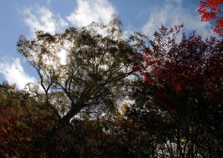 空と雲と 紅葉三昧(8)