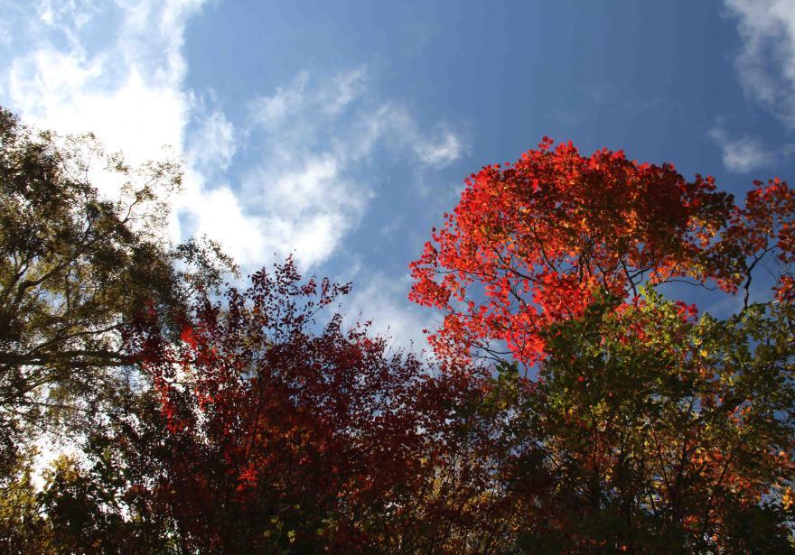 空と雲と 紅葉三昧(9)