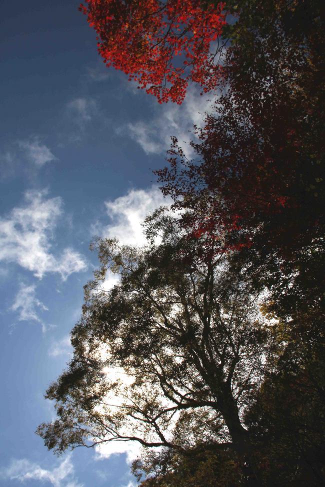空と雲と 紅葉三昧(10)