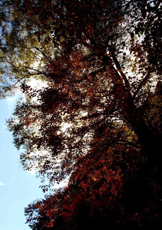 空と雲と 紅葉三昧(11)