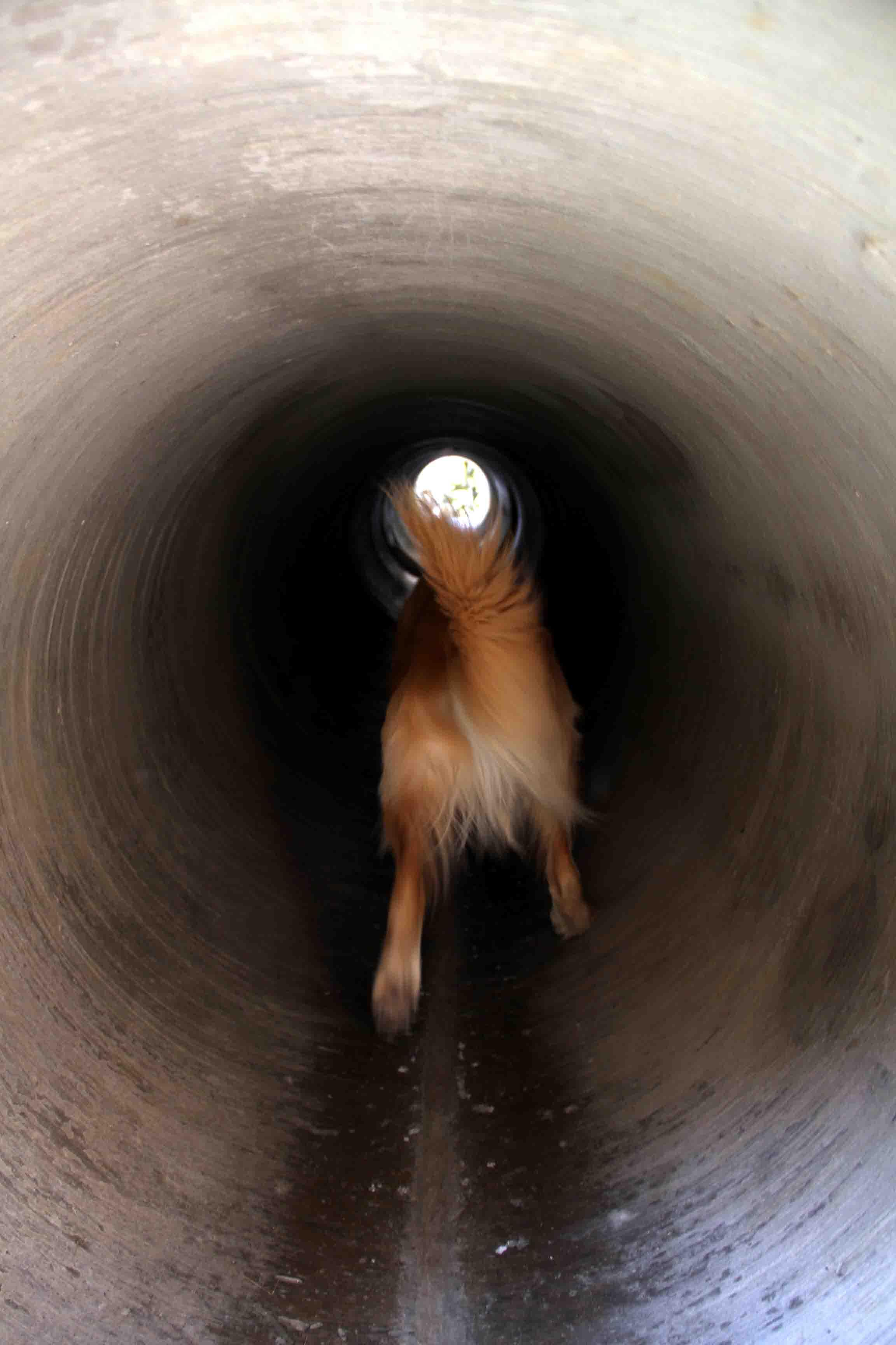 長~いトンネル(1)