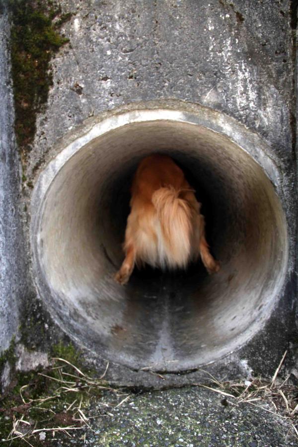 狭いトンネル(1)