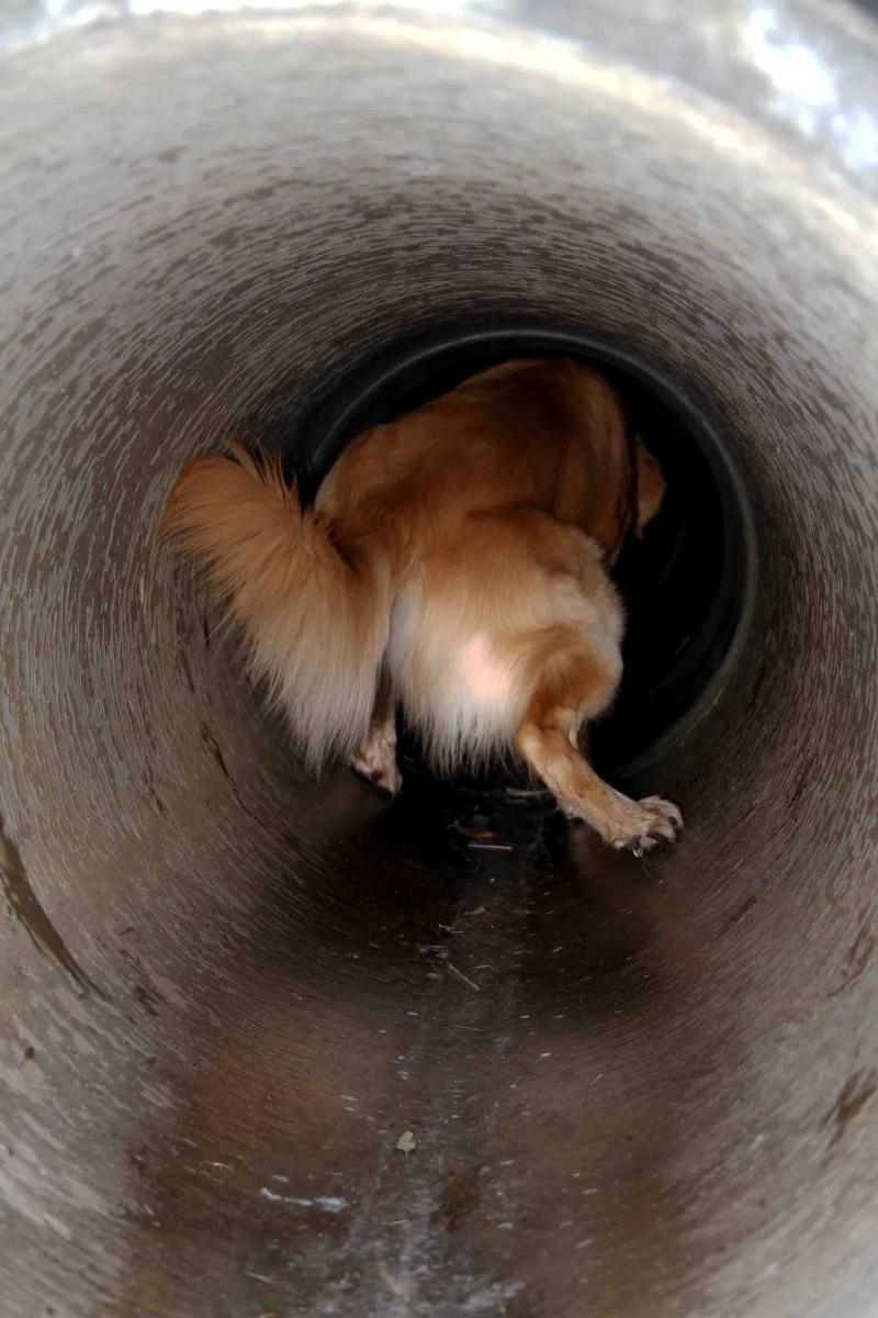 狭いトンネル(2)