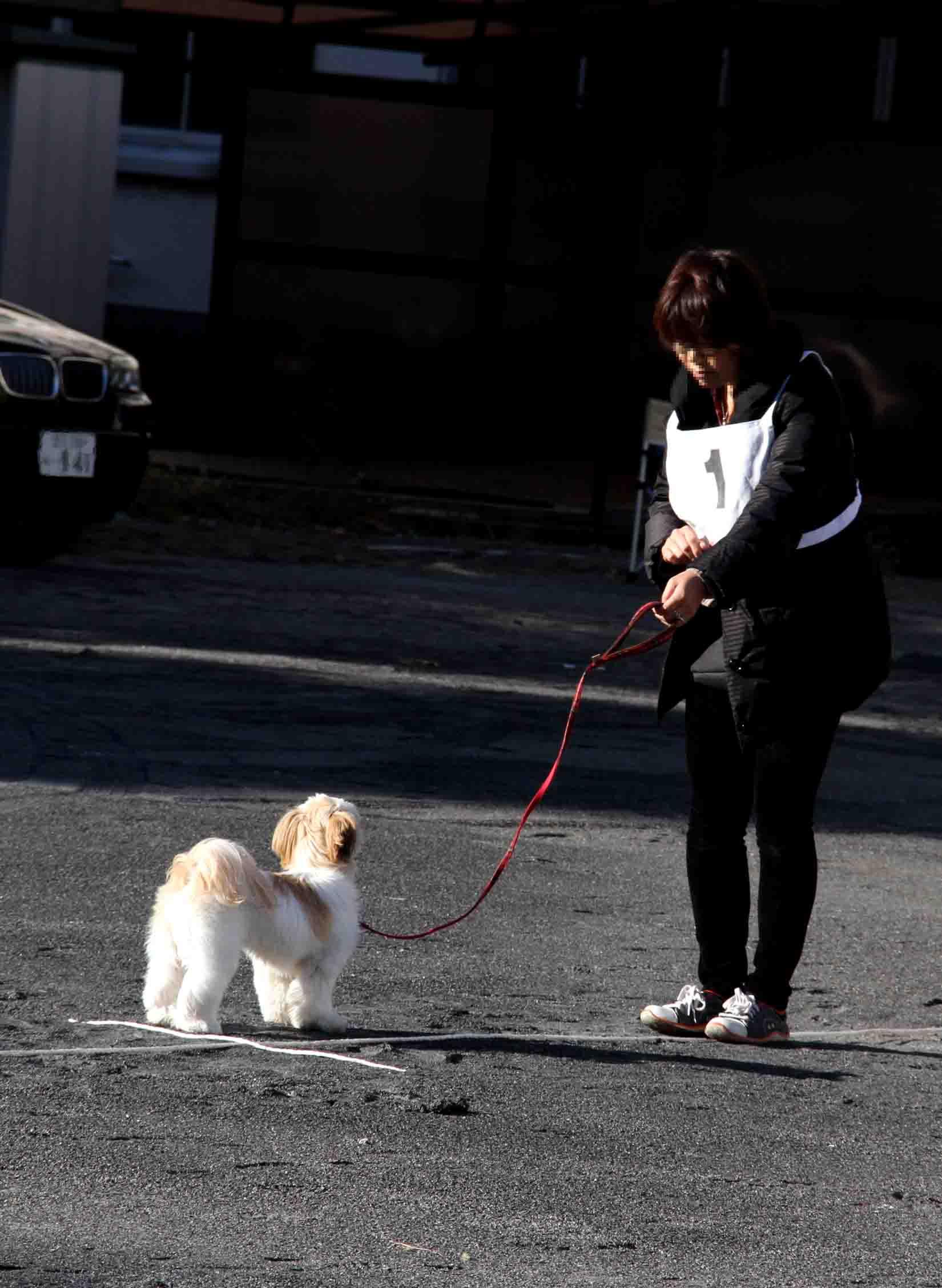 人と犬とのいい関係 基礎(5)