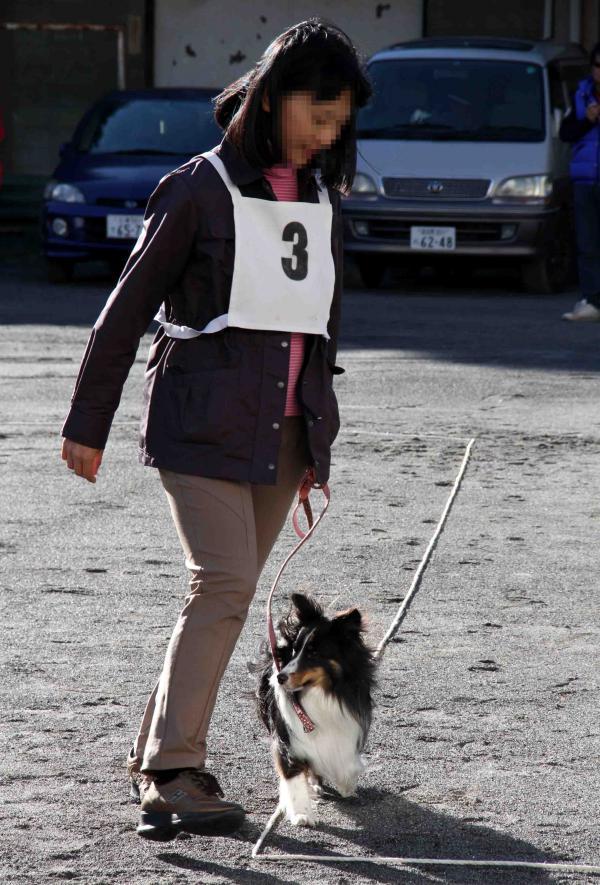 人と犬とのいい関係 基礎(1)