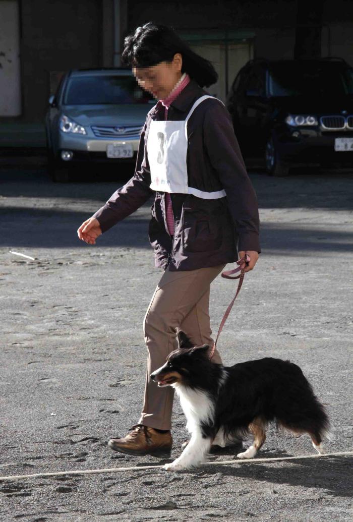 人と犬とのいい関係 基礎(2)