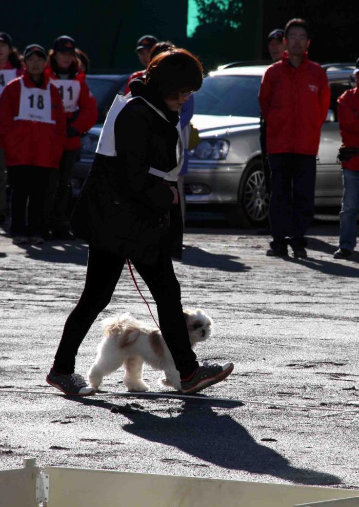 人と犬とのいい関係 基礎(3)