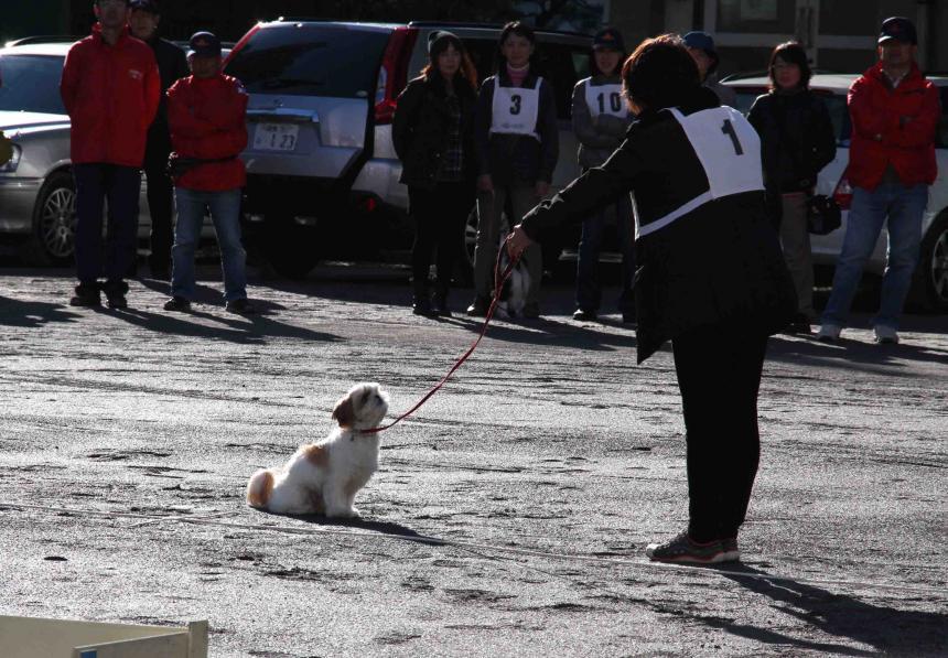 人と犬とのいい関係 基礎(4)