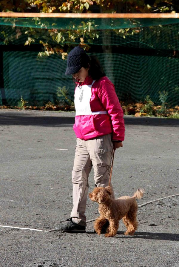 人と犬とのいい関係 基礎(6)
