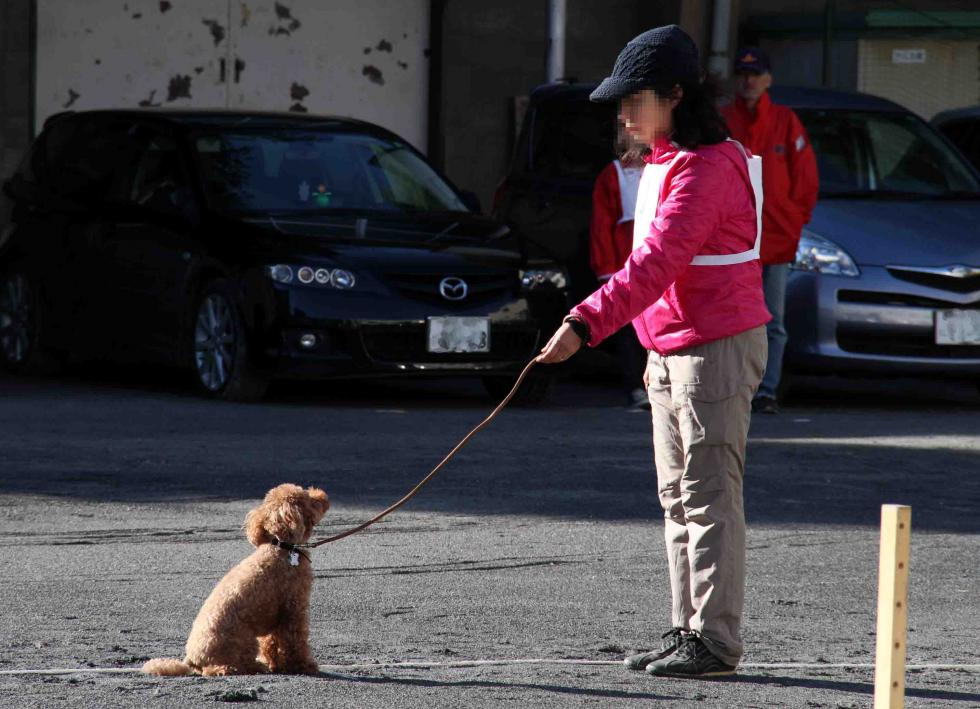 人と犬とのいい関係 基礎(7)