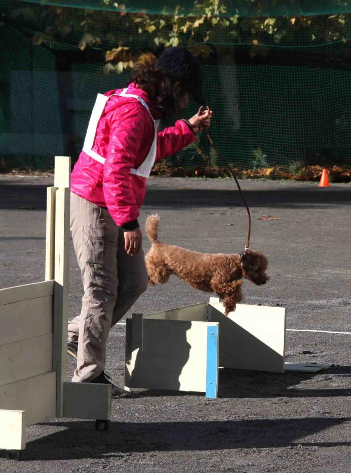 人と犬とのいい関係 基礎(8)