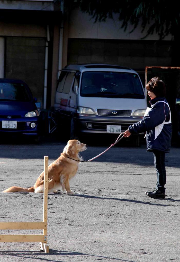 人と犬とのいい関係 基礎(10)
