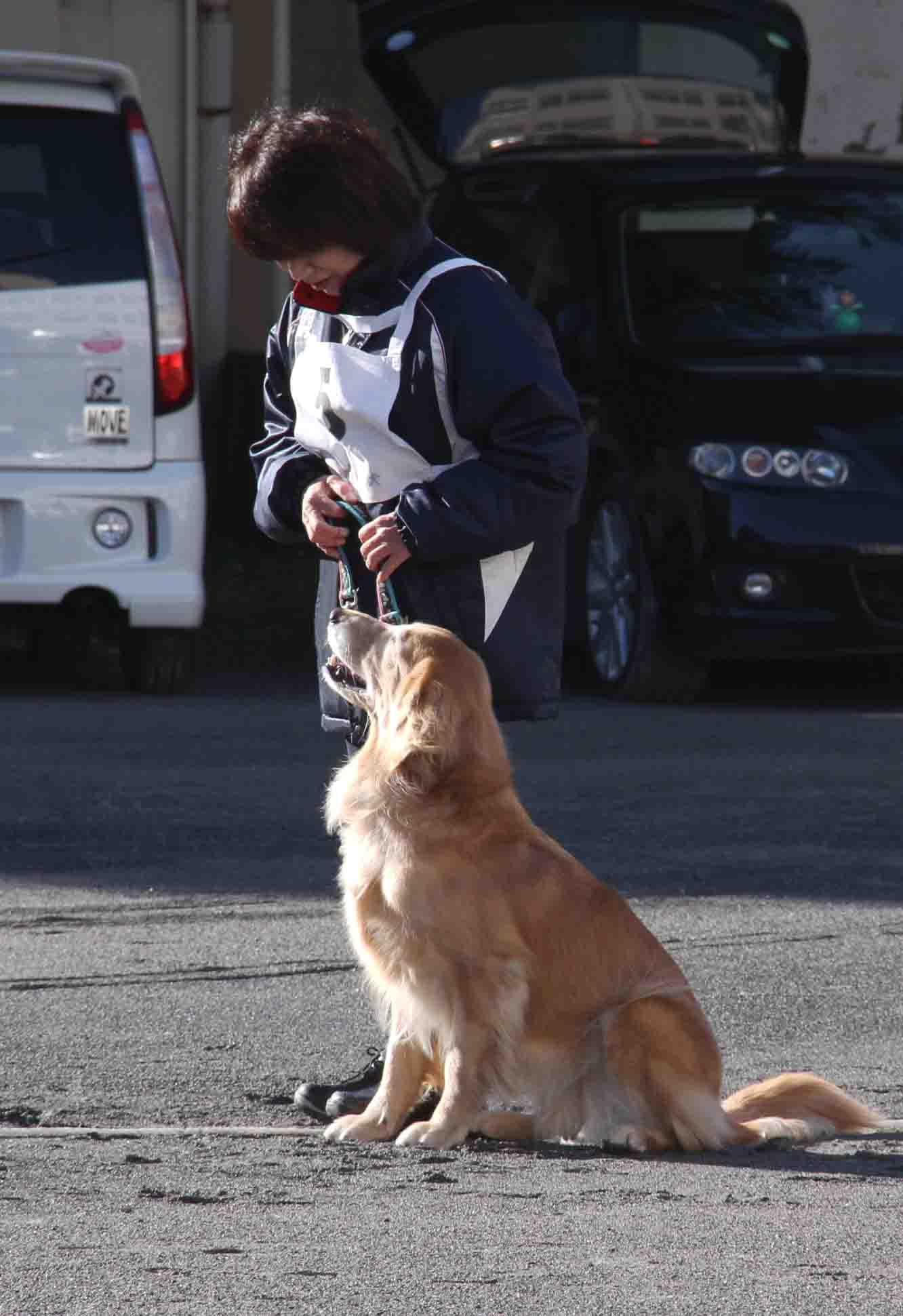 人と犬とのいい関係 基礎(11)