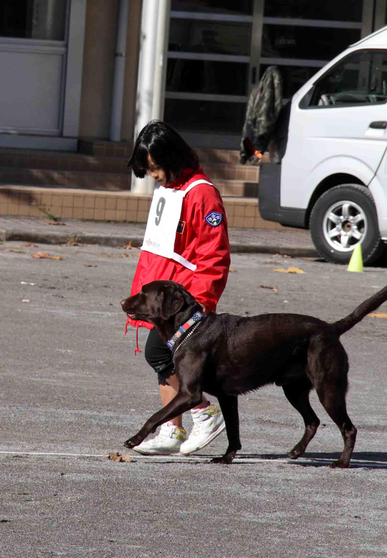 人と犬とのいい関係 基本(2)