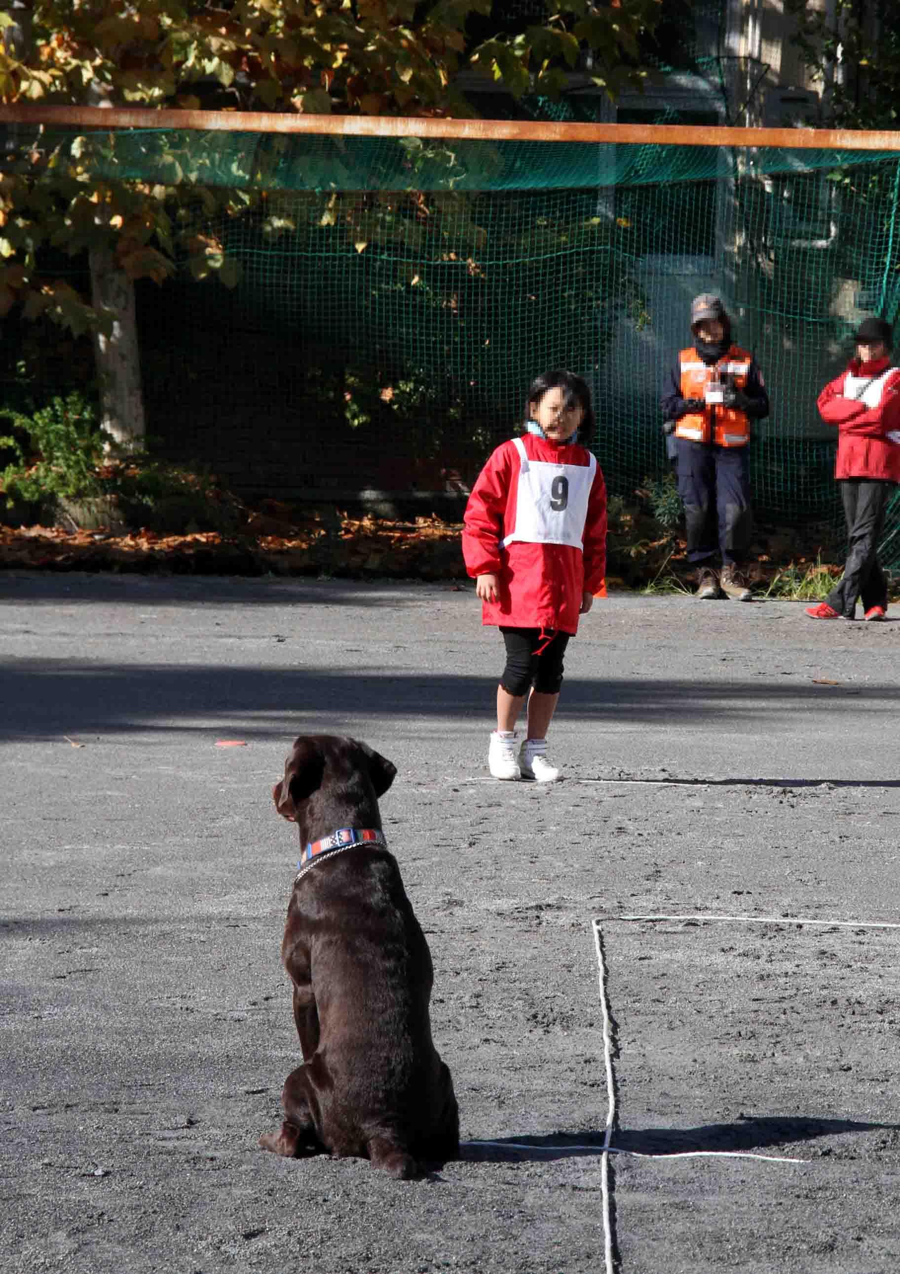 人と犬とのいい関係 基本(4)