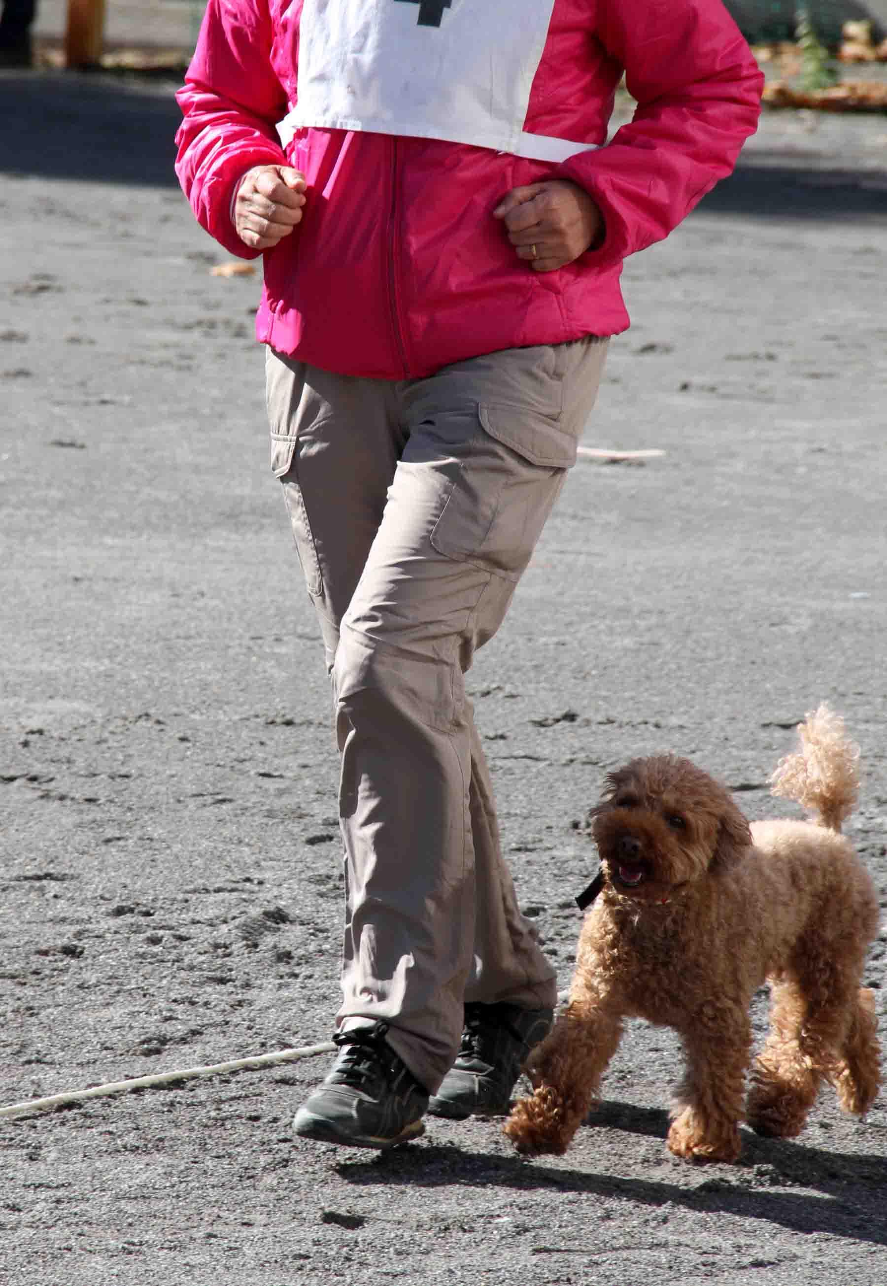 人と犬とのいい関係 基本(7)