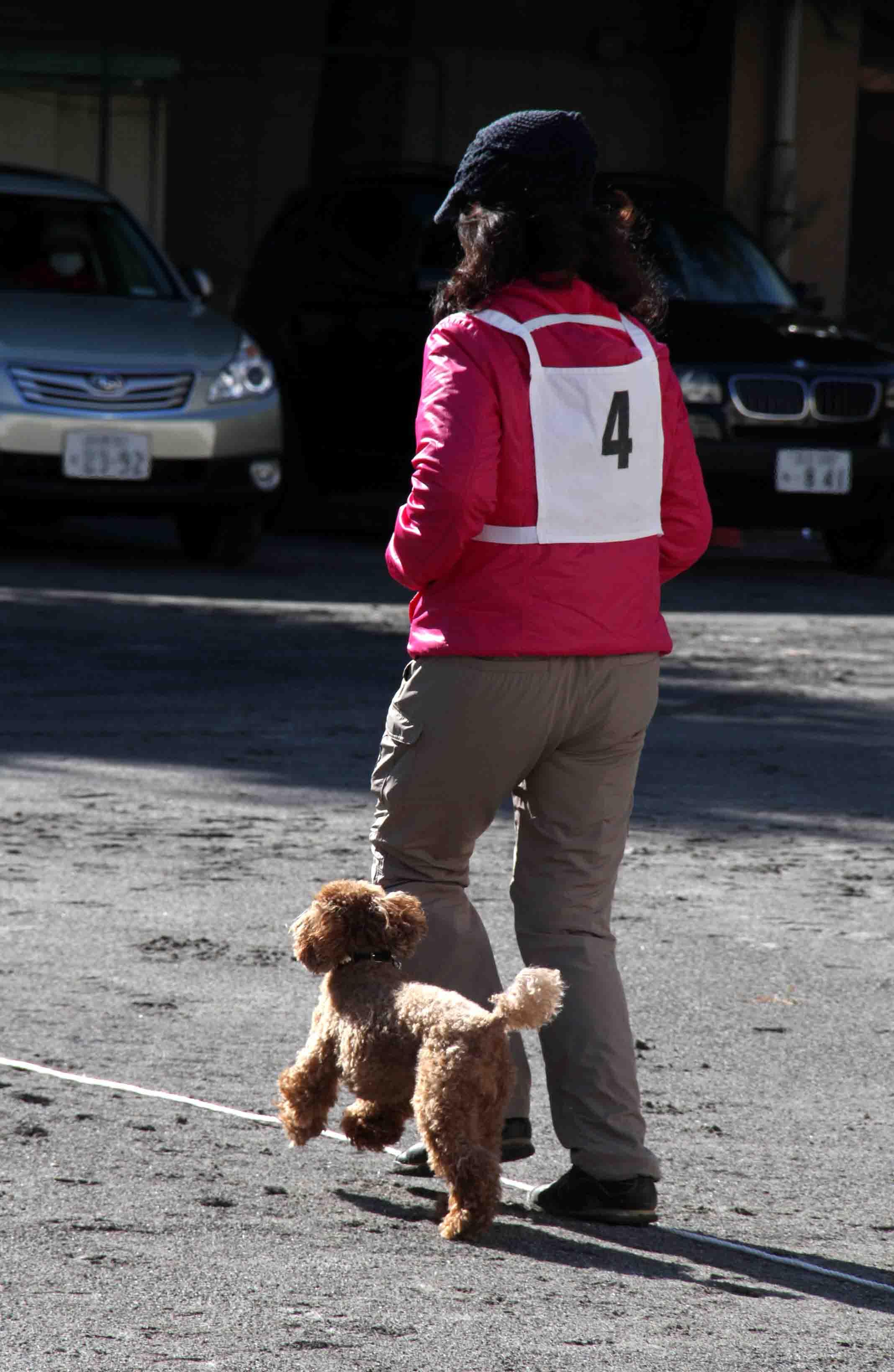 人と犬とのいい関係 基本(8)
