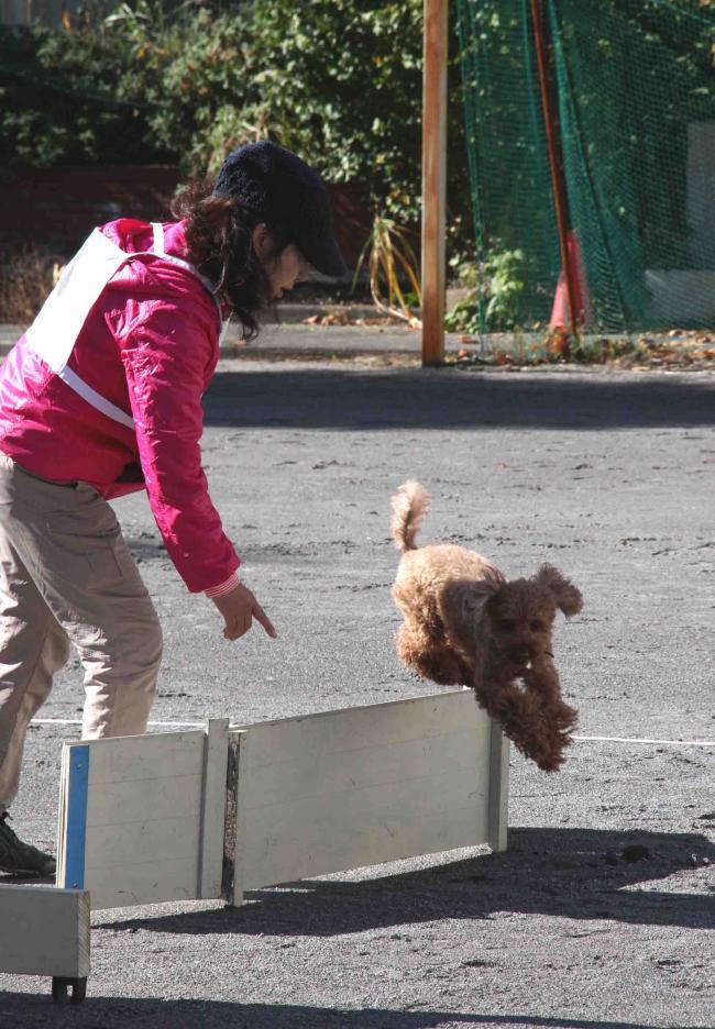 人と犬とのいい関係 基本(12)
