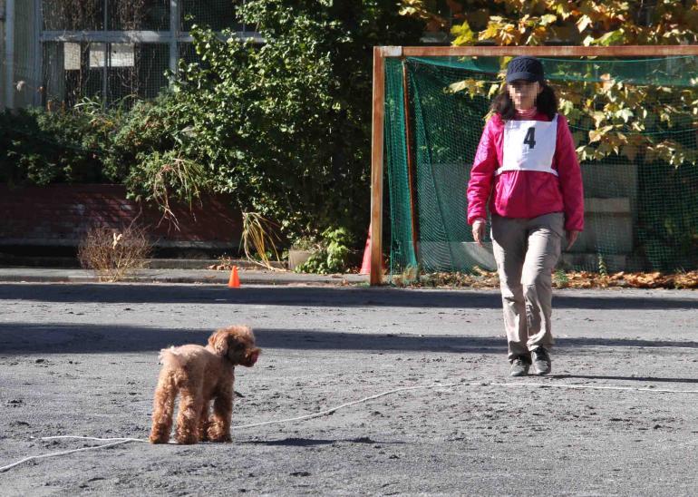 人と犬とのいい関係 基本(11)