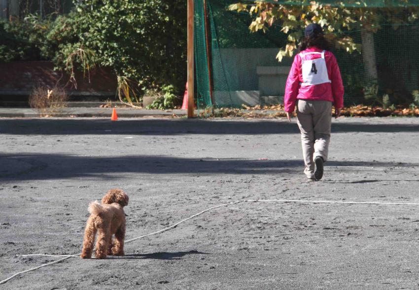 人と犬とのいい関係 基本(10)