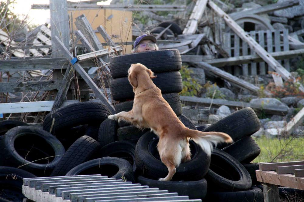 捜索犬の訓練 20121209(1)