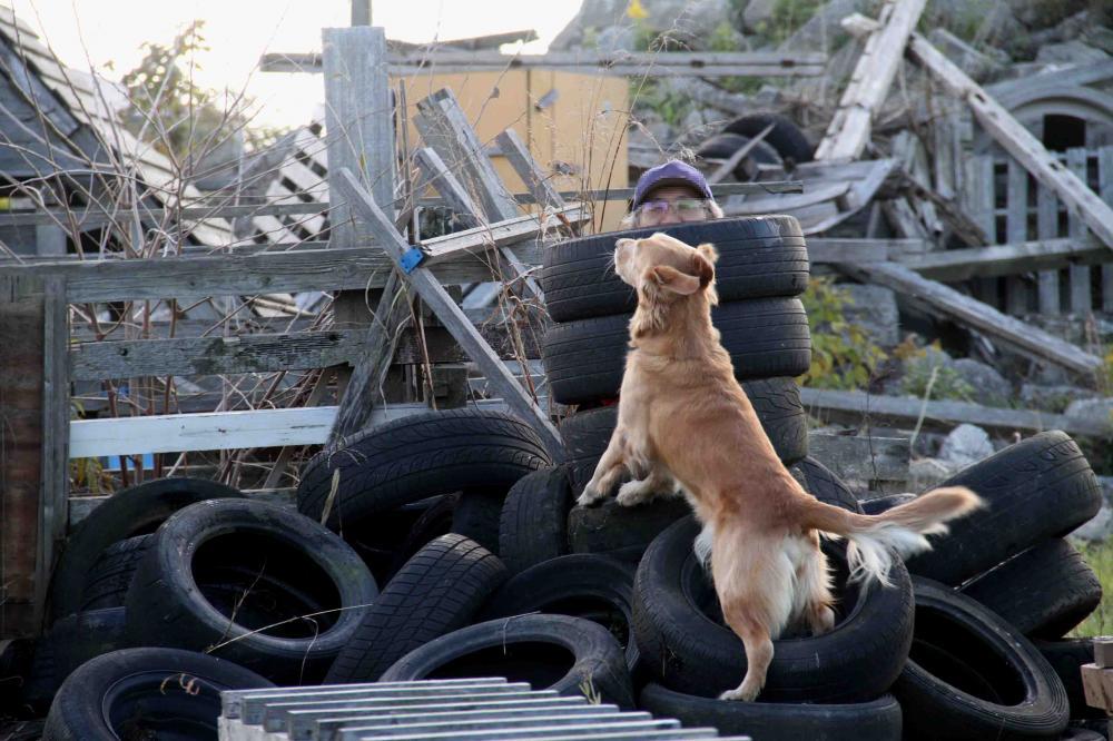 捜索犬の訓練 20121209(2)