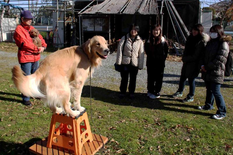 捜索犬の訓練 20121216 その前に