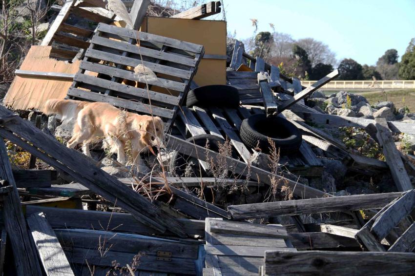 捜索犬の訓練 ヒット 20121216(4)