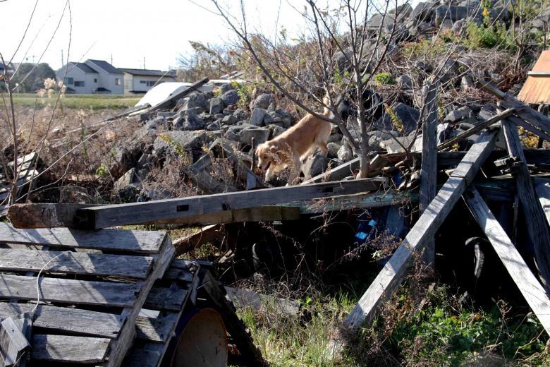 捜索犬の訓練 ヒット 20121216(5)