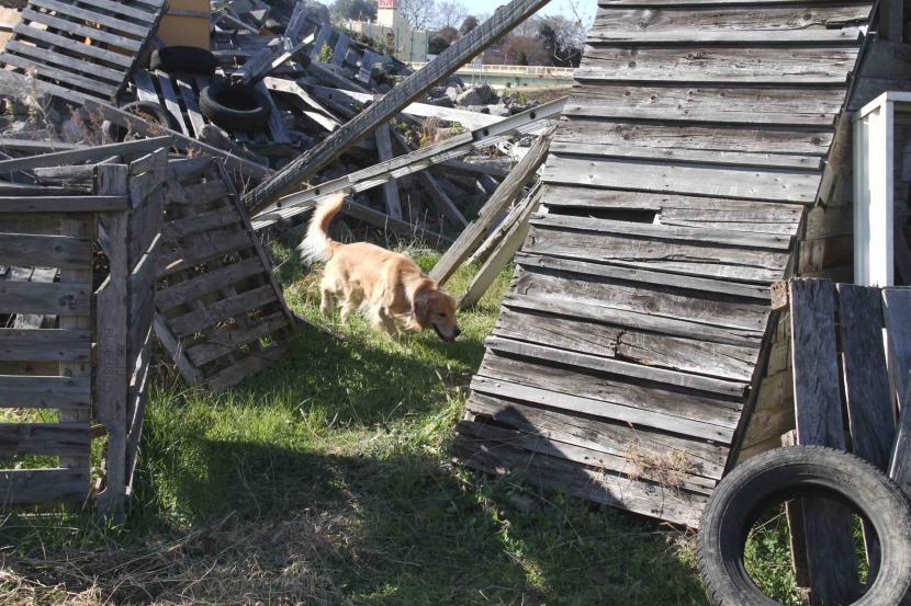捜索犬の訓練 ヒット 20121216(8)
