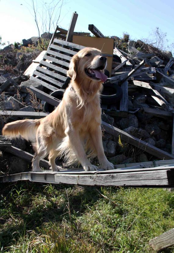 捜索犬の訓練 ヒット 20121216(14)