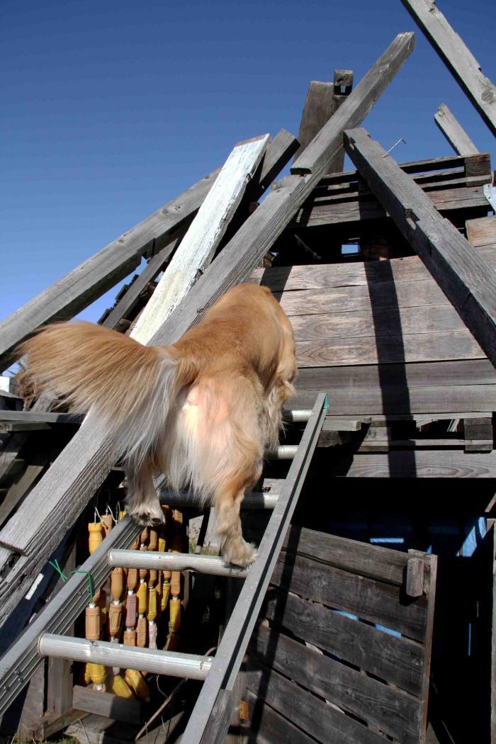 捜索犬の訓練 ヒット 20121216(15)