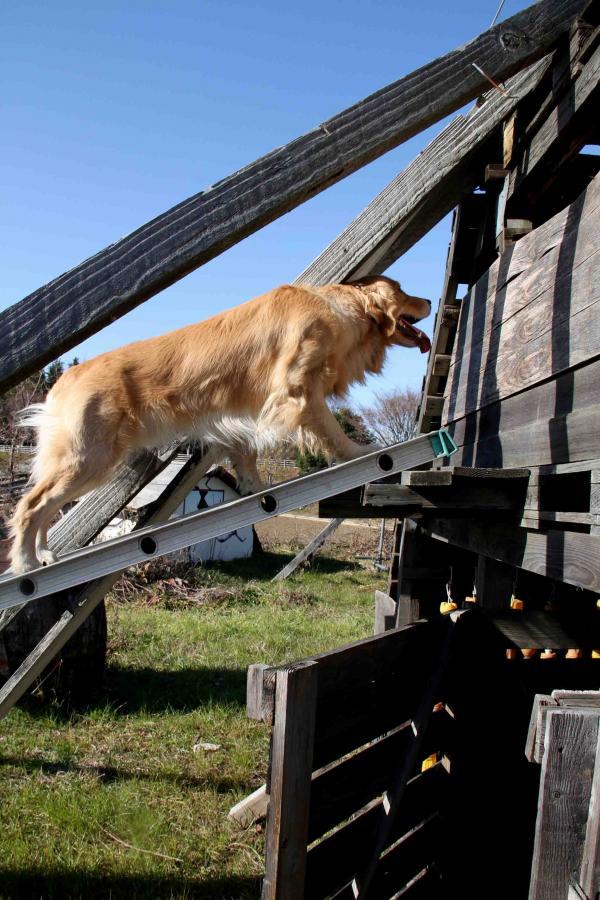 捜索犬の訓練 ヒット 20121216(16)