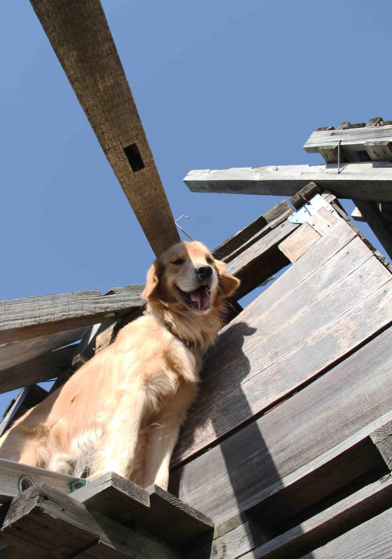 捜索犬の訓練 ヒット 20121216(18)