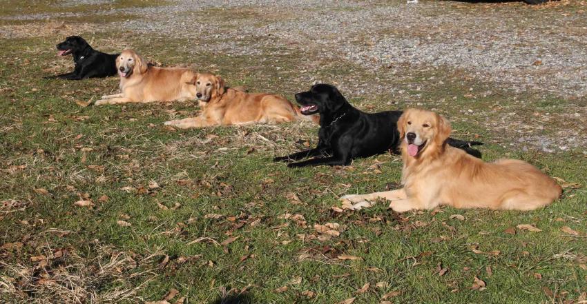 捜索犬の訓練 ヒット 20121216(19)