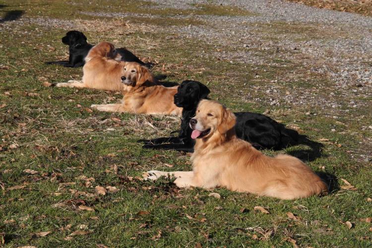 捜索犬の訓練 ヒット 20121216(20)