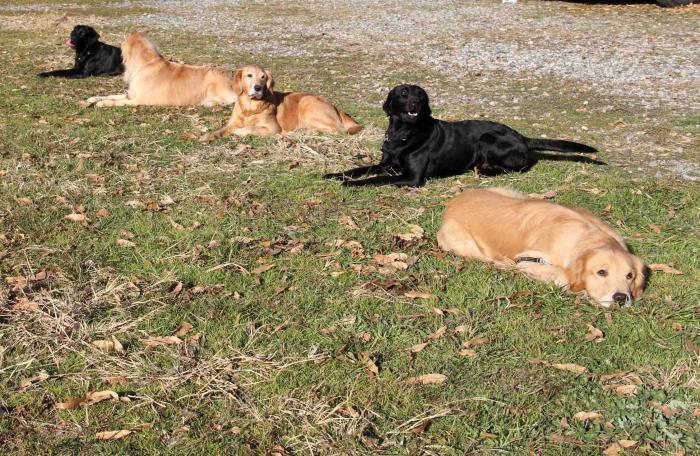 捜索犬の訓練 ヒット 20121216(21)