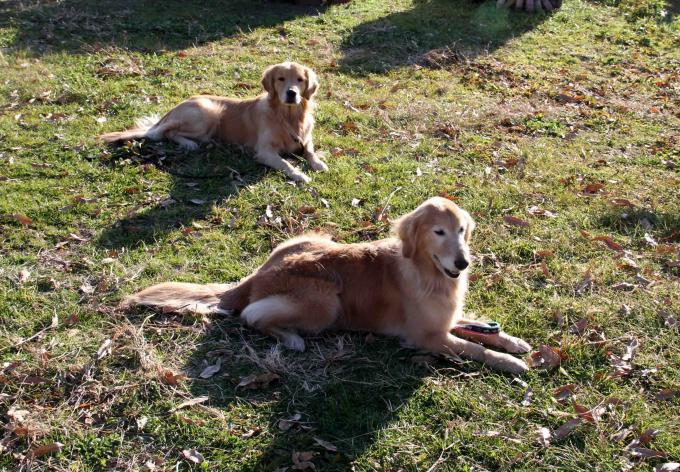捜索犬の訓練 ヒット 20121216(22)