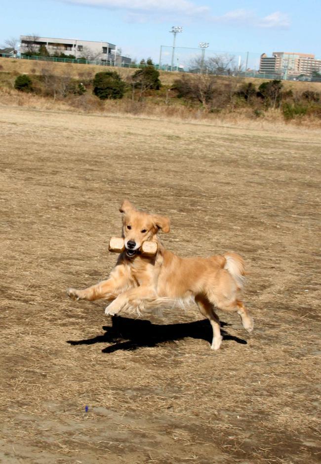 弾む犬(1)