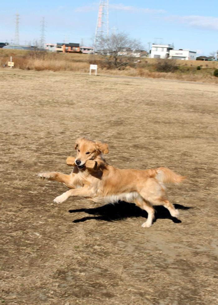 弾む犬(2)