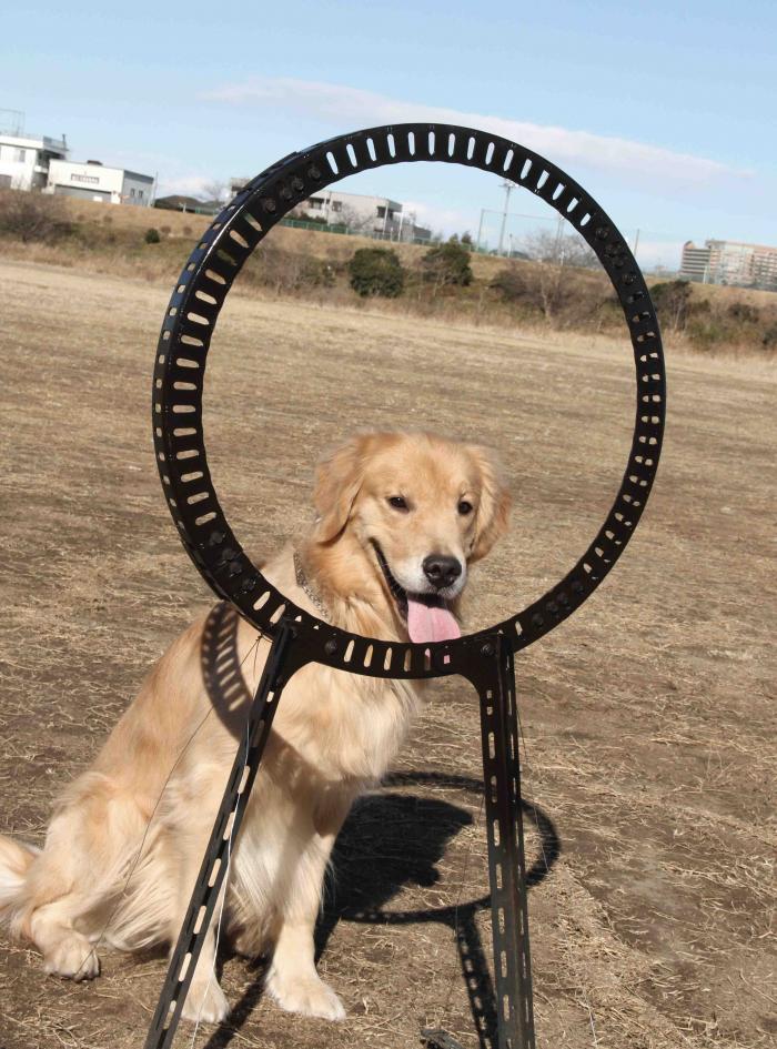 ヒットの輪跳び(1)