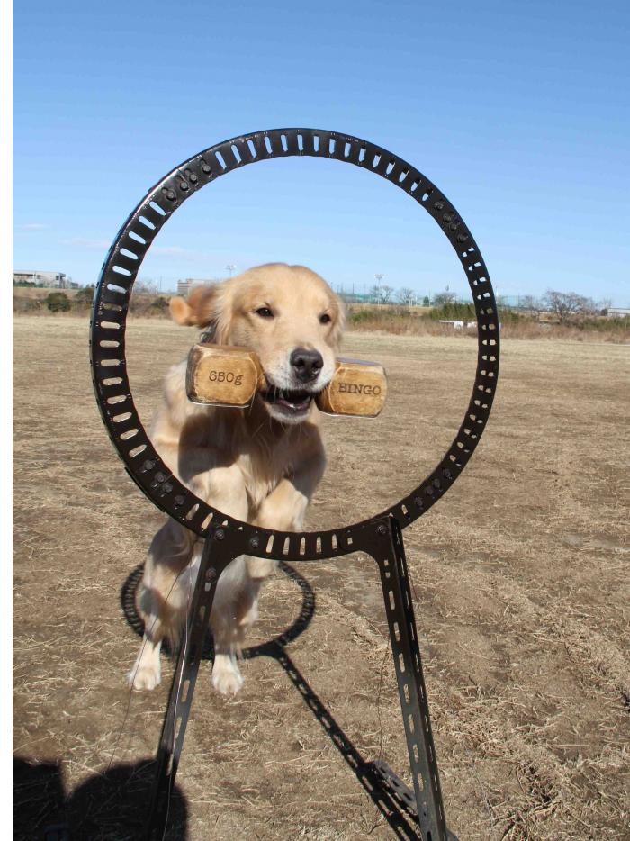 ヒットの輪跳び(3)