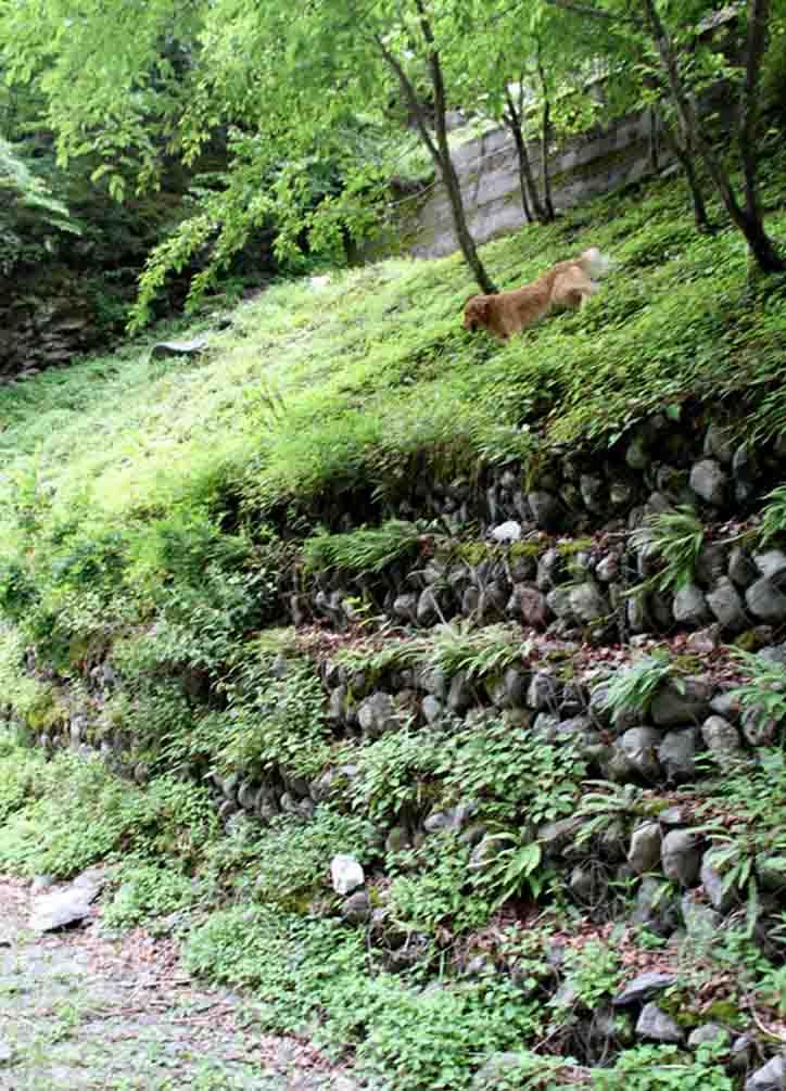 三峰川 7月14日 鍛錬 18