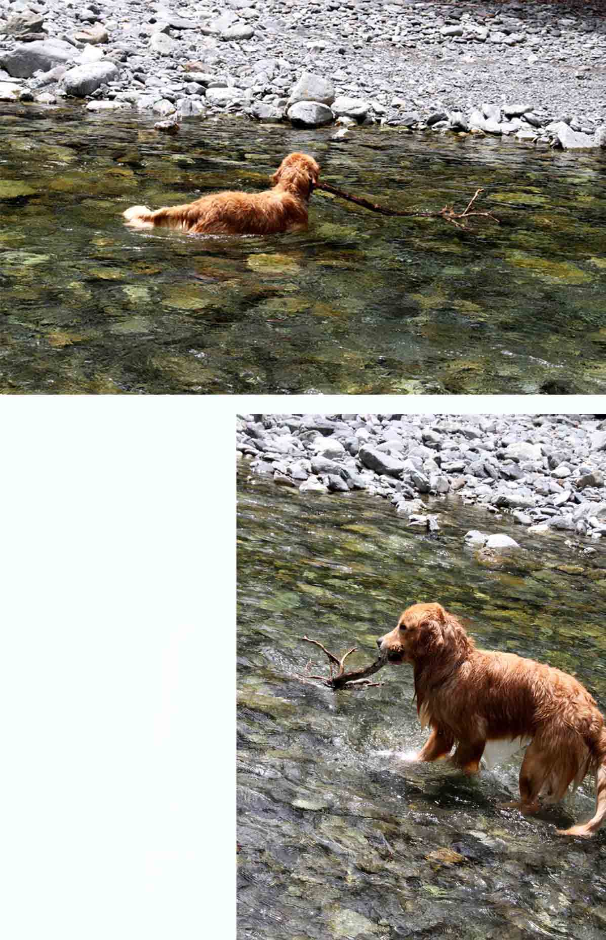 三峰川 7月14日 3度目の渓流 レトリーブ(1)